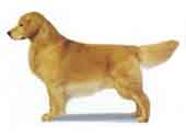 Golden Retriever-DI.jpg (7612 bytes)