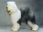 Old English Sheepdog-DI.jpg (7671 bytes)
