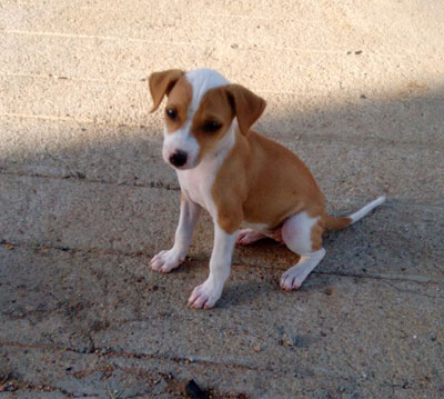 Dogs India - Puppy for Free Adoption