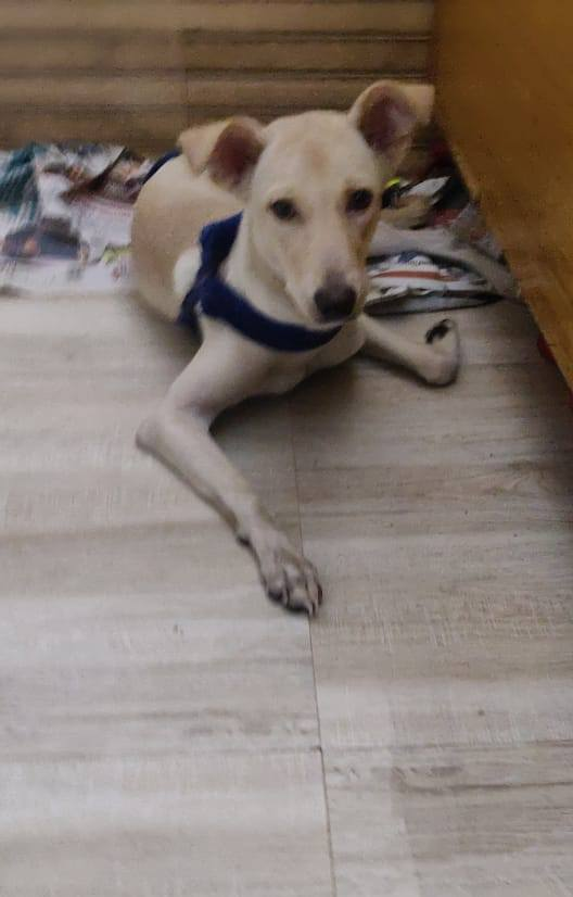DogsIndia.com - Adoption - Puppy from Usha - Delhi