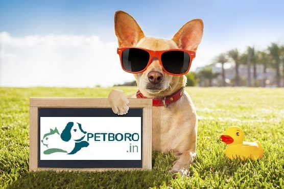 DogsIndia.com - Boarding Facility for Dogs - Petboro, Bangalore